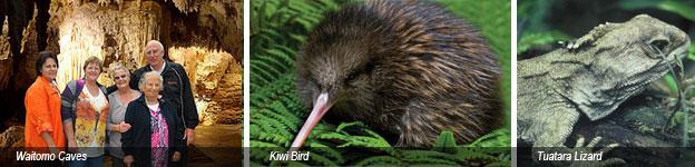 Auckland to Waitomo Caves Tour