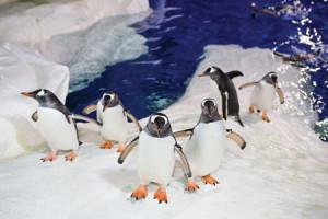 Kelly Tarltons Aquarium
