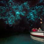 #WGCDT – Waitomo Glow-worm Caves Experience