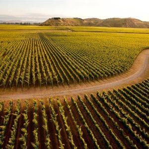 vineyard-napier-1600x1200px.jpg